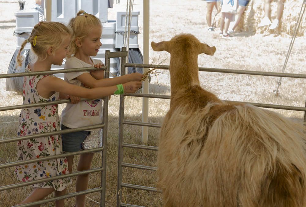 Tendring Show